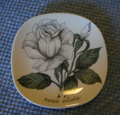 Rosa elida