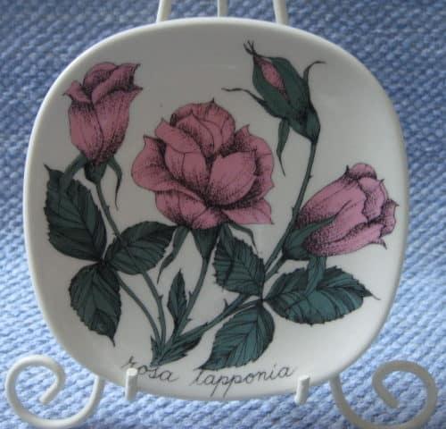 Rosa lapponia